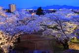 盛岡城跡公園の桜