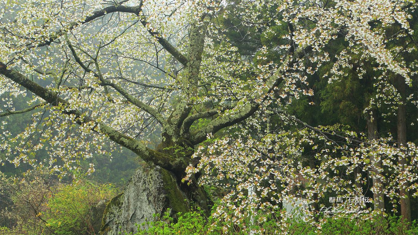 石割桜 壁紙