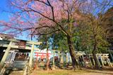 飯田市 愛宕稲荷神社のエドヒガン桜
