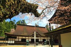 金剛峯寺の桜