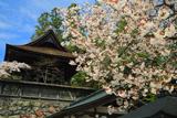 金剛峯寺 六時の鐘の桜