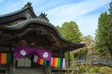 高野山大師教会と山桜