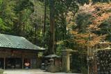 高野山 女人堂の山桜