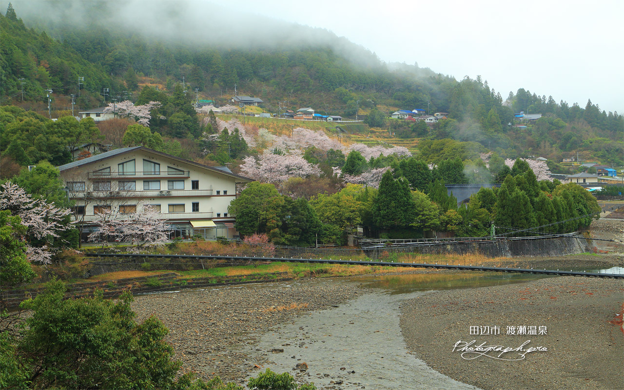 渡瀬温泉の桜 壁紙
