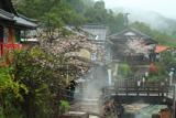 熊野本宮温泉郷の桜