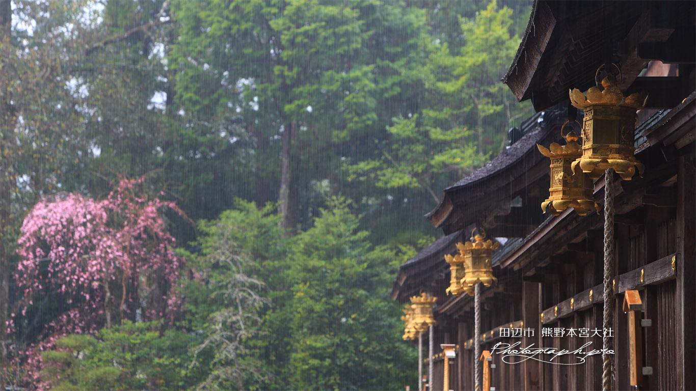 熊野本宮大社の桜 壁紙