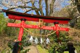 西ノ宮の桜