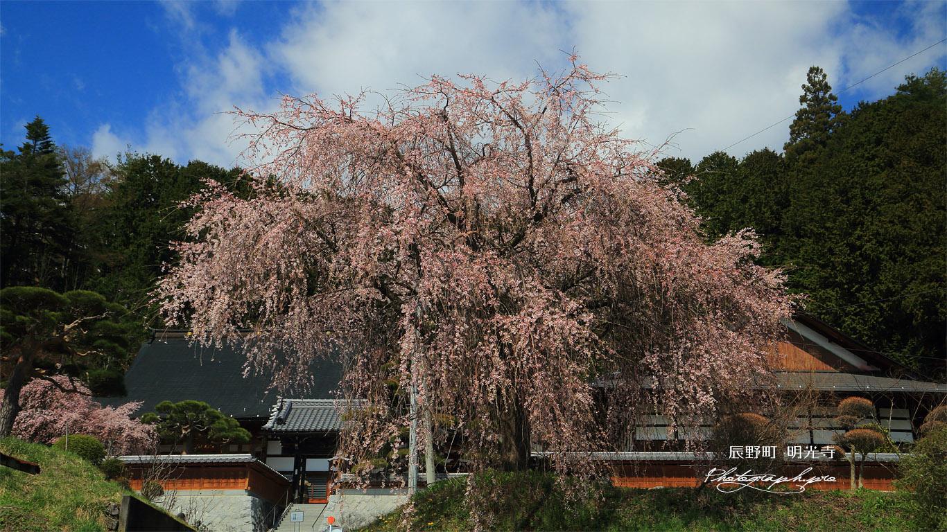 辰野町 明光寺の桜 壁紙
